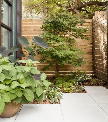 cl ture de jardin quel bois choisir. Black Bedroom Furniture Sets. Home Design Ideas