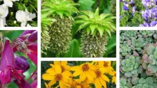 Bien choisir son taille haies guide achat conseil for Achat de plantes sur internet