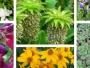 Acheter des plantes sur Internet : à quoi faut-il faire attention ?