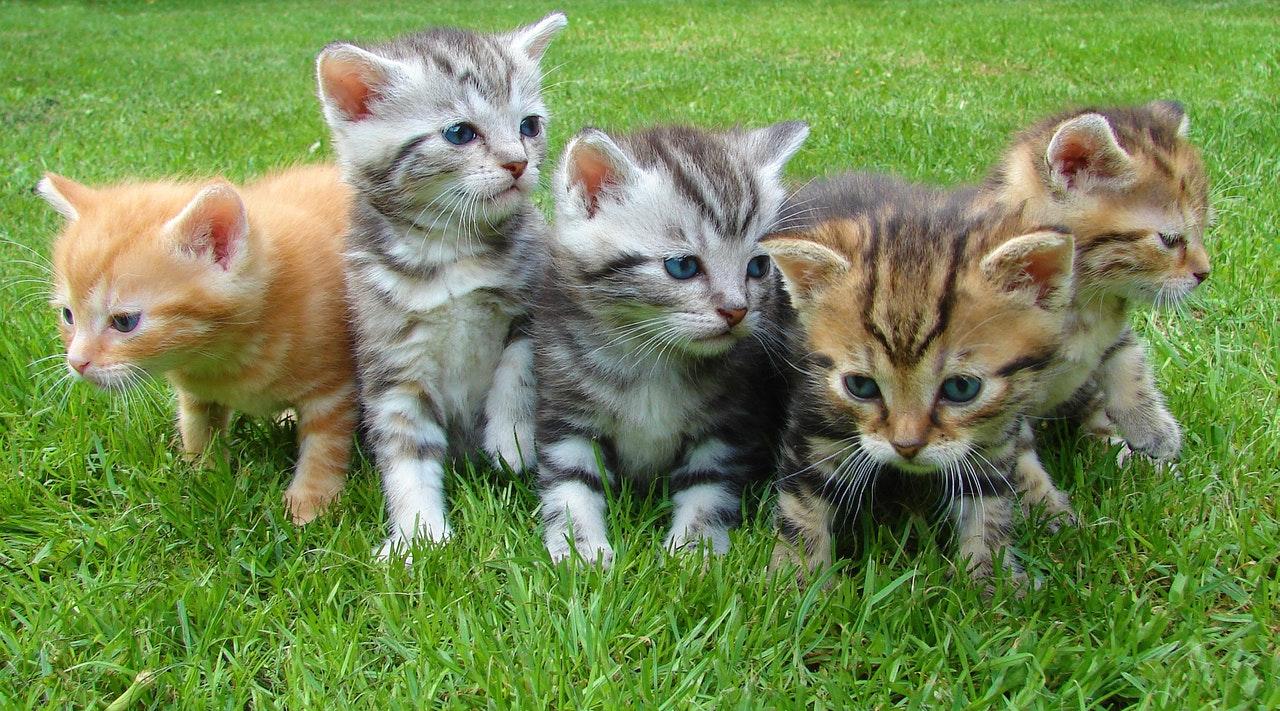 cinq chatons assis dans l'herbe
